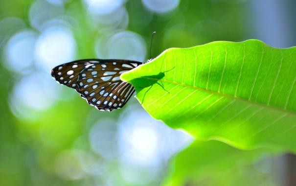 Фото обои лист, блики, бабочка, тень