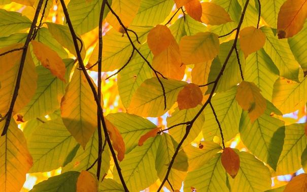 Фото обои осень, листья, ветки, природа