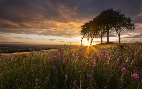 Фото обои деревья, закат, цветы