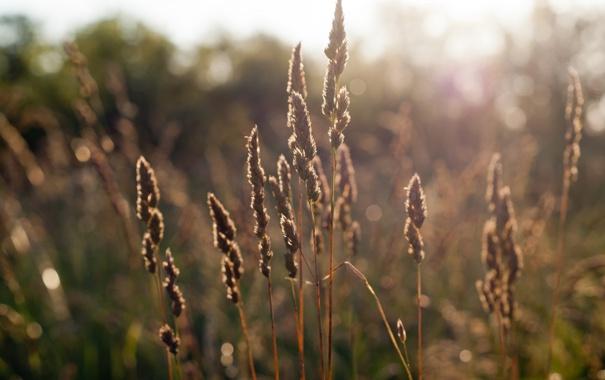 Фото обои поле, лето, трава, закат