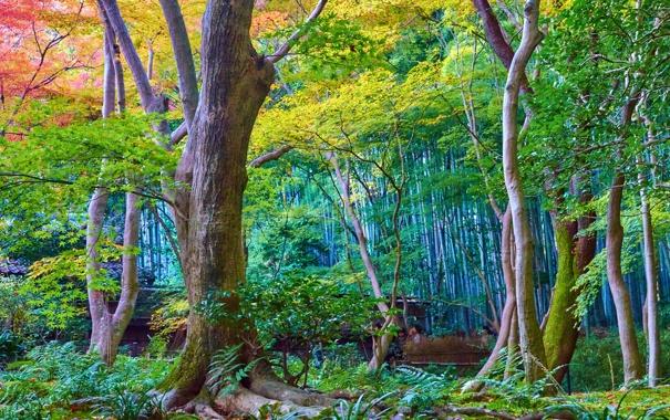 Фото обои осень, лес, деревья, парк