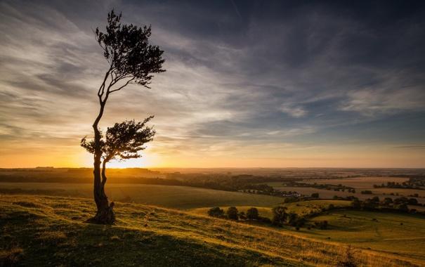 Фото обои поле, пейзаж, закат, дерево