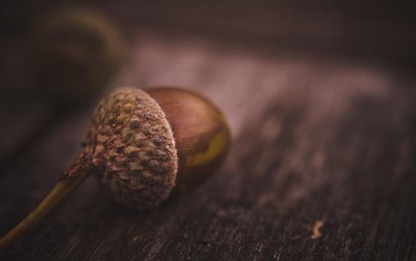Фото обои макро, стол, жолудь