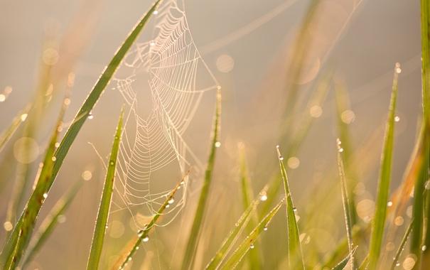 Фото обои лето, трава, солнце, макро, роса, блики, утро
