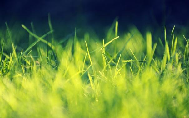 Фото обои трава, листья, макро, свет, deviantart, Playing with Sunlight, salmanarif