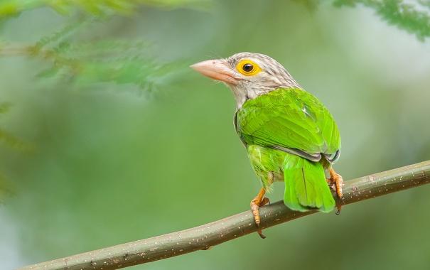 Фото обои птица, цвет, ветка, перья, клюв, хвост