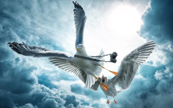 Фото обои облака, птицы, чайки, камера