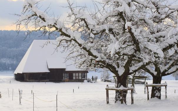 Фото обои зима, снег, деревья, пейзаж