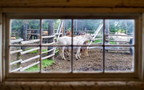 Фото обои horses, stable, window glass