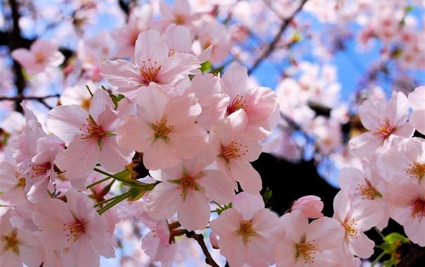 Фото обои природа, весна, цветение, полное, буйное
