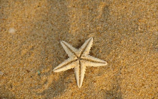 Фото обои песок, звезда, морская, суша