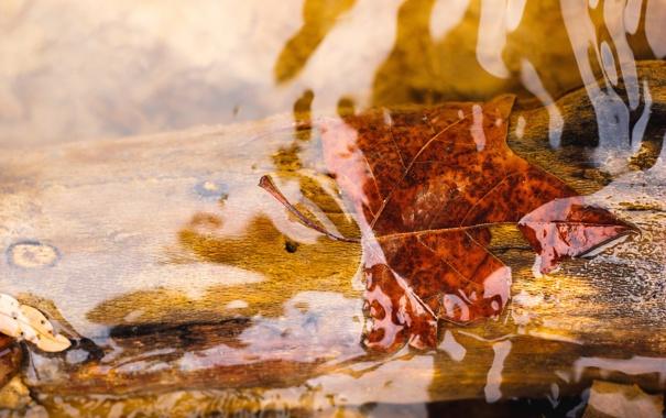 Фото обои листья, вода, макро