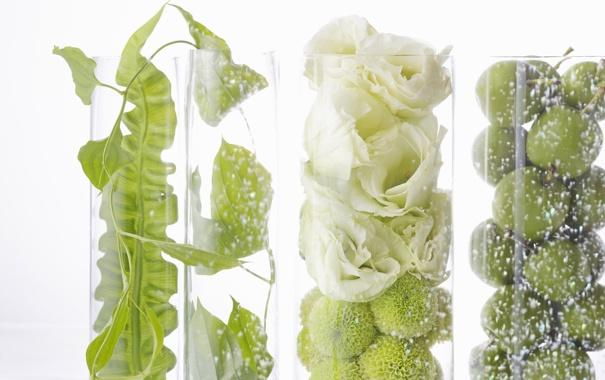Фото обои белый, цветы, прозрачный, коробка, яблоки, растения