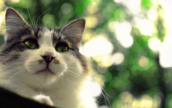 Фото обои кошка, глаза, кот, взгляд, фон, кошак