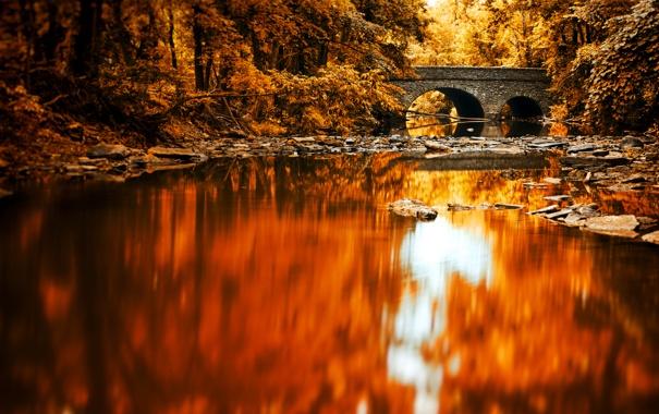 Фото обои лес, мост, отражение, река, зеркало