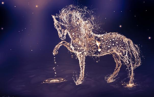 Фото обои вода, капли, животное, конь, лошадь, арт