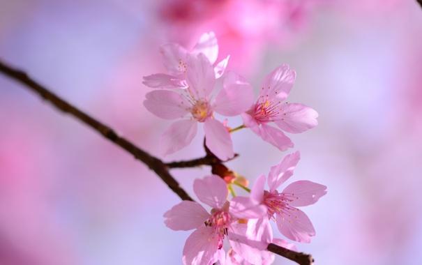 Фото обои цветок, ветка, весна
