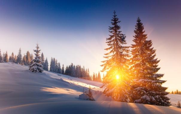 Фото обои Закат, Природа, Зима, Деревья, Снег, Рассвет, Лучи