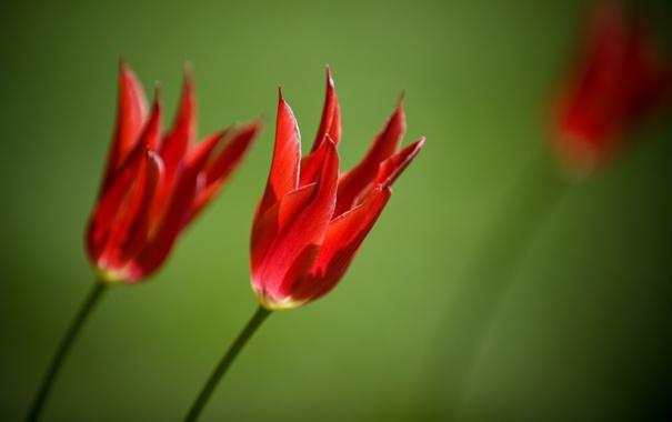 Фото обои макро, цветы, фото, обои