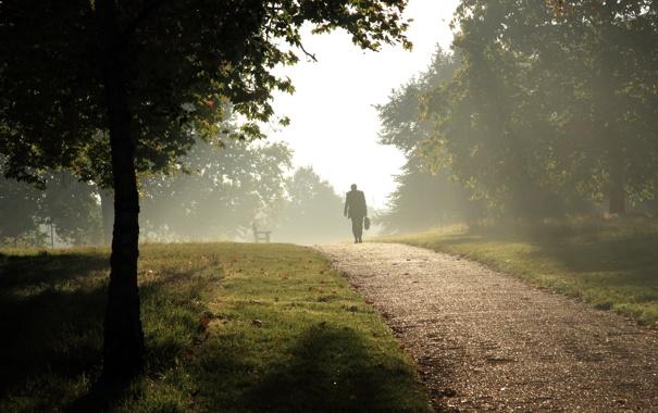 Фото обои туман, парк, человек, дорожка