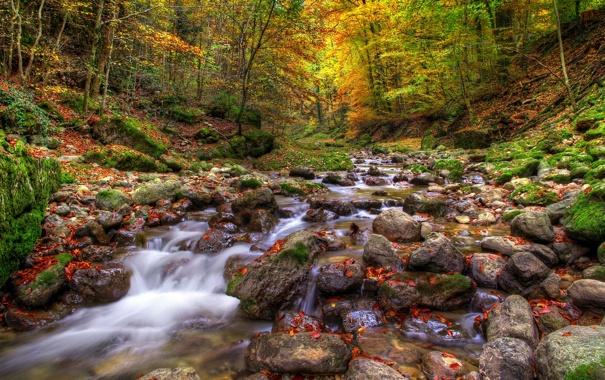 Фото обои осень, лес, река, камни