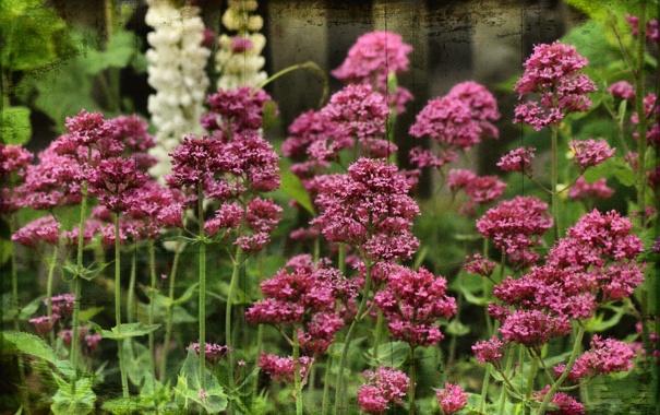 Фото обои цветы, природа, стиль