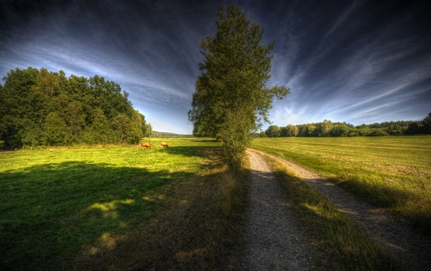 Фото обои коровы, Way To Heaven, дорога, дерево