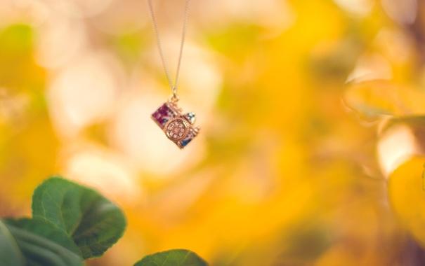 Фото обои осень, листья, камни, фон, желтые, зеленые, фотоаппарат