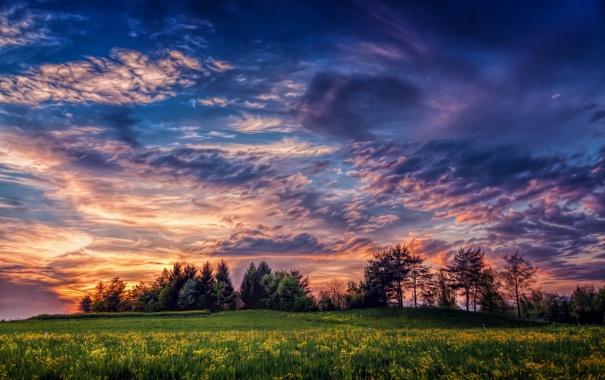 Фото обои поле, деревья, пейзаж, закат, цветы, природа, trees