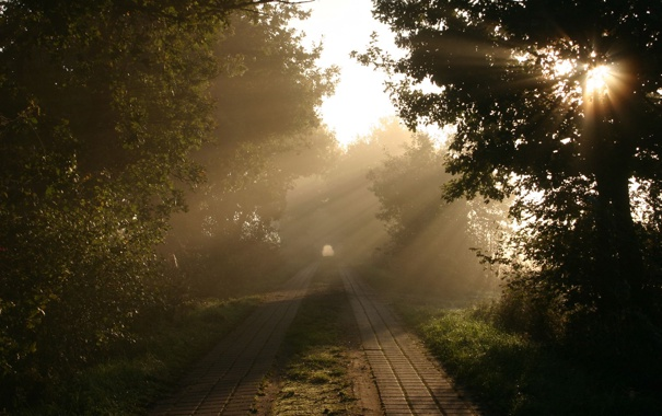 Фото обои дорога, лучи, свет, деревья, природа, утро