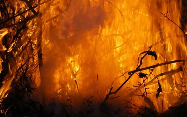 Фото обои фон, огонь, горение