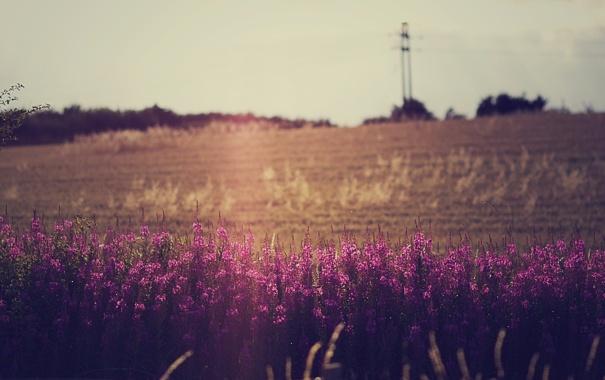 Фото обои поле, небо, цветы