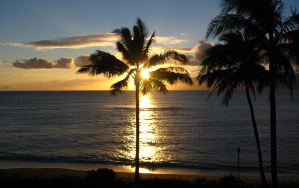 Фото обои закат, Hawaii, вечер, пальмы, океан