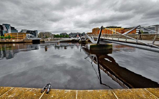 Фото обои голуби, река, мост, город