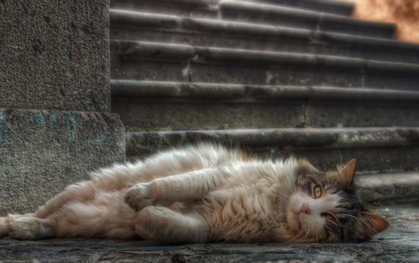 Фото обои кошка, взгляд, фон