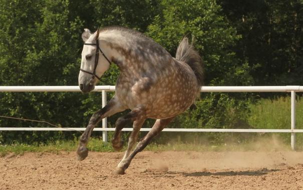 Фото обои фон, конь, бег