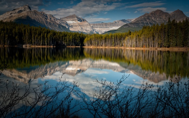Фото обои лес, горы, озеро, отражение, Канада, кусты