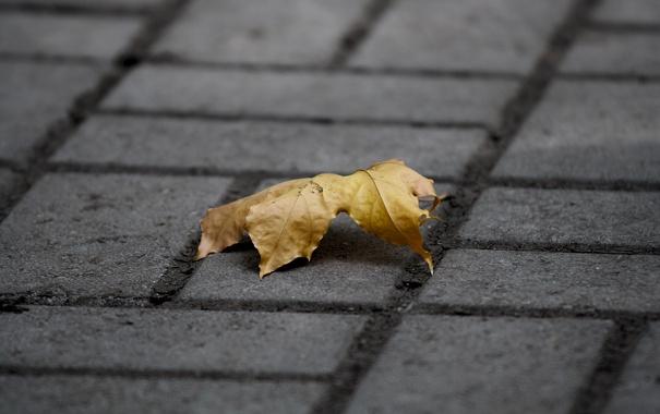 Фото обои осень, лист, тротуар