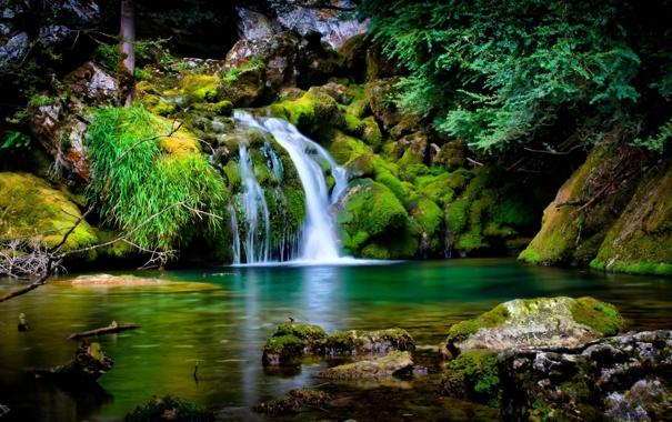 Фото обои трава, деревья, камни, водопад, мох, ель