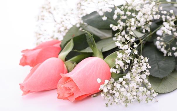 Фото обои листья, цветы, розы
