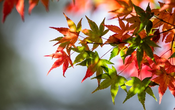 Фото обои осень, листья, зеленые листья, стебли, autumn, leaves, красные листья