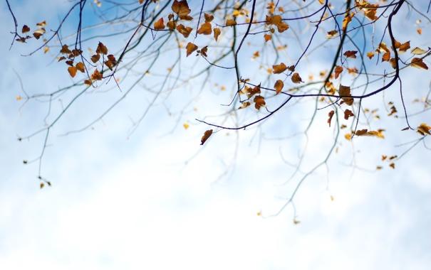 Фото обои осень, небо, листья, природа, фон, обои, растения