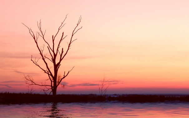 Фото обои море, вода, деревья, ветки, природа, озеро, отражение