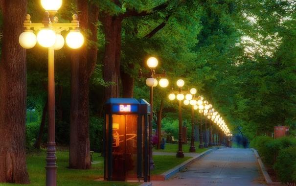 Фото обои свет, деревья, огни, парк, вечер, фонари, дорожка
