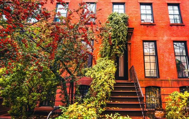 Фото обои осень, велосипед, дерево, Нью-Йорк, Бруклин, тротуар, Соединенные Штаты