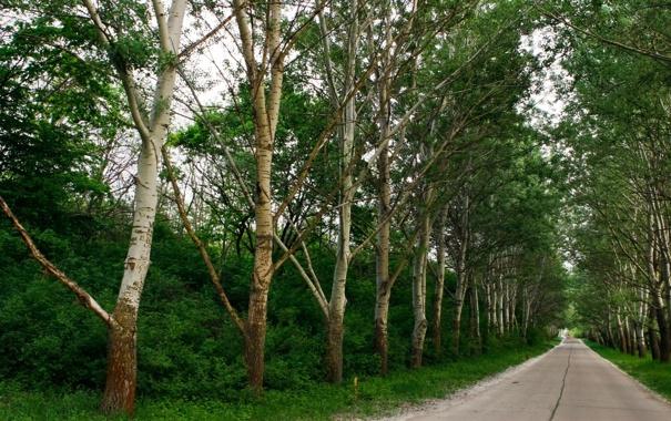 Фото обои дорога, зелень, деревья