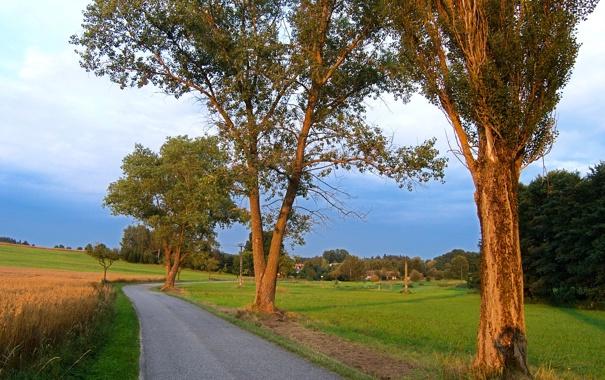 Фото обои дорога, поле, деревья, Чехия, деревня, обочина, Kačlehy
