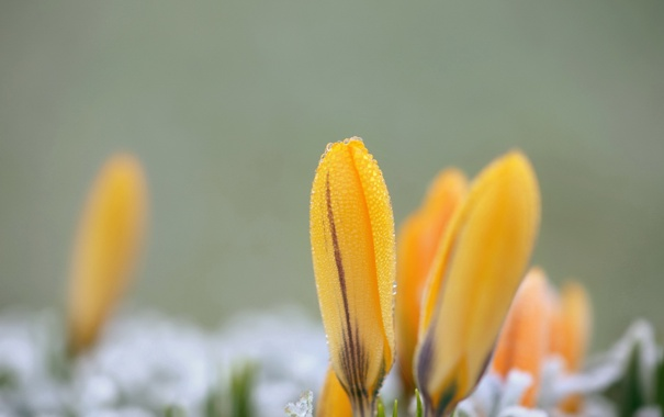 Фото обои капли, макро, цветы