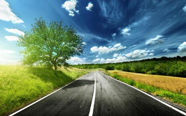 Фото обои дорога, поле, небо, трава, асфальт, деревья, цветы