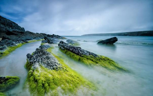 Фото обои море, небо, водоросли, камни, скалы, отлив